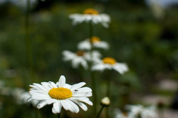 Kraków: w roku 2018 ma powstać kilkanaście miejskich ogrodów