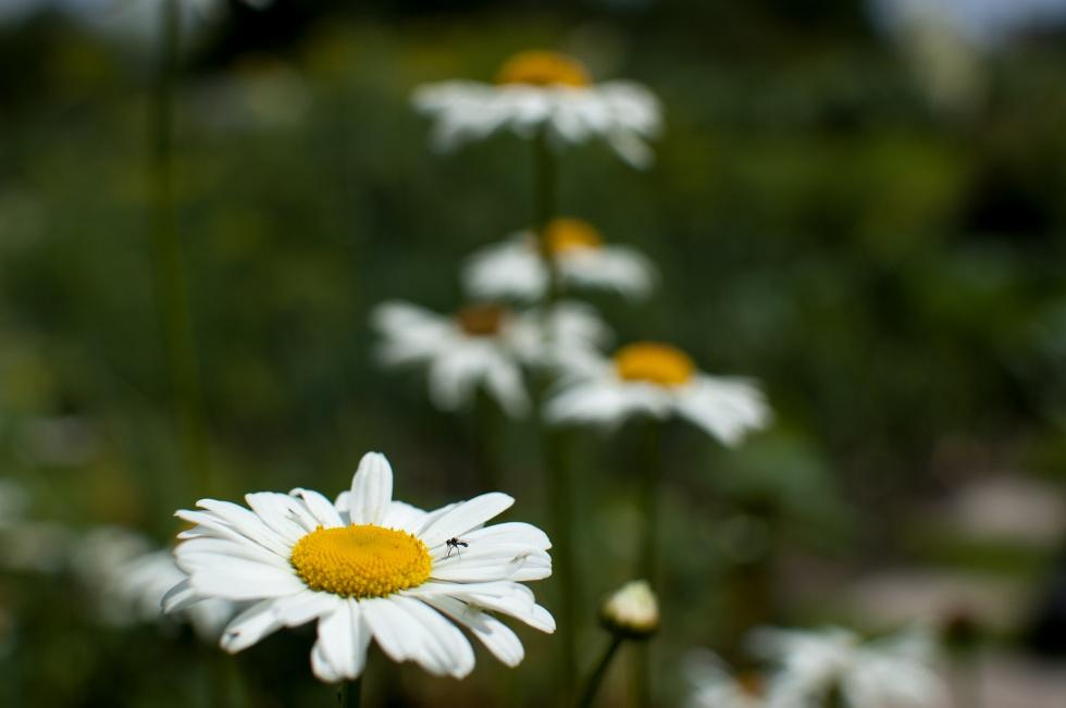 Olsztyn: warsztaty ogrodnicze dla seniorów