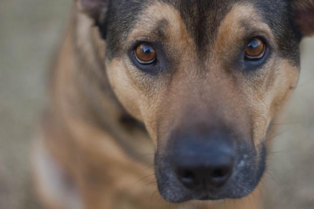 Zwolnienie z opłaty za psa przysługuje tylko samotnym