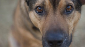 Lekarze zalecają seniorom adopcję zwierząt domowych