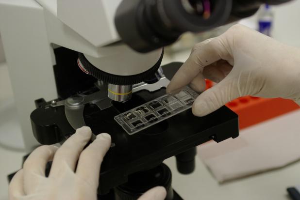 Naukowcy: praca mitochondriów pozwoli zrozumieć procesy starzenia