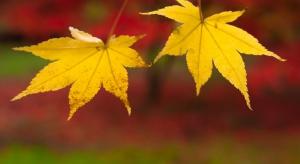 Jesień życia: czego boją się starsi Polacy?