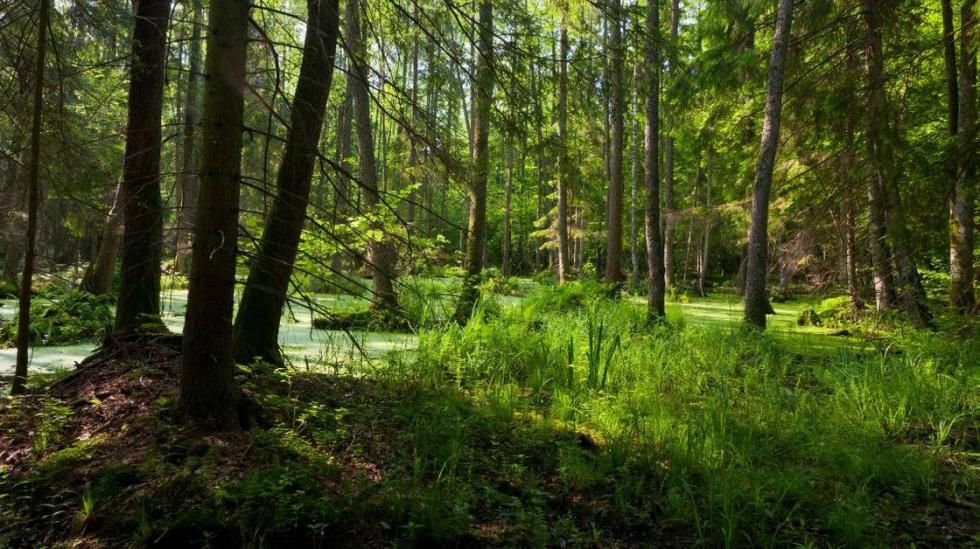 Nordic walking: poznaj 7 najpiękniejszych polskich tras