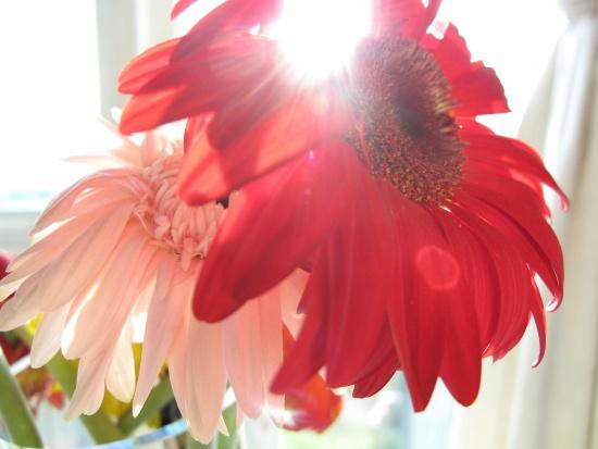 Menopauza a trzy najgroźniejsze nowotwory. Jak się obronić?