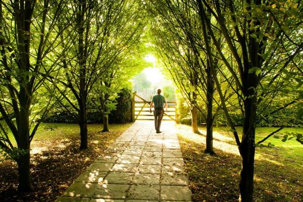 Naukowcy twierdzą, że drzewa w miastach chronią przed astmą