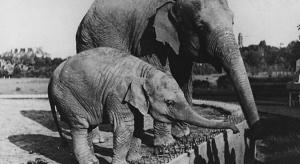 Masz stare zdjęcia lub filmy z warszawskiego zoo? Ogród prowadzi zbiórkę