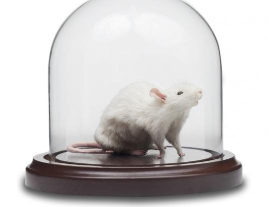 Rak piersi: badania na myszach dowiodły, że odpowiednia dieta hamuje przerzuty