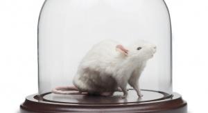 Spowolniono starzenie się myszy. Specjalne krople już dostępne w Rosji