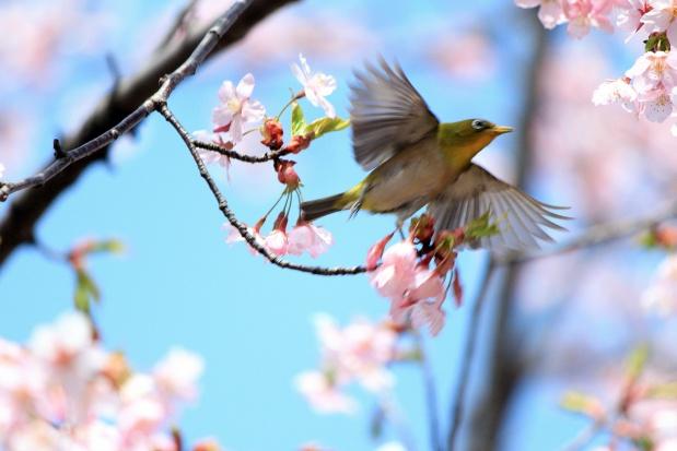 Badania: im bliżej ptaków i drzew, tym mniej zmartwień