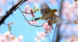 20 marca zaczyna się astronomiczna wiosna