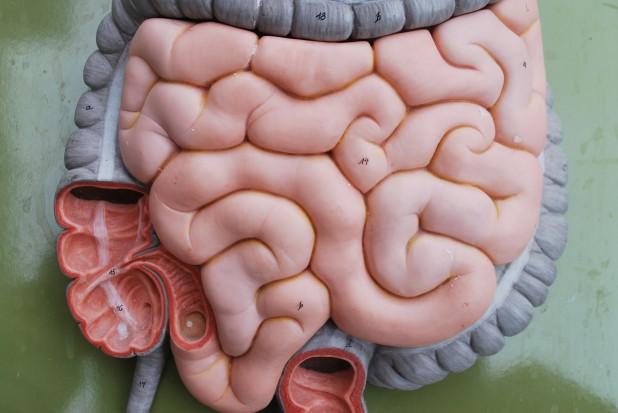 Skład mikroflory jelitowej może mieć związek z demencją